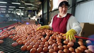 Yumurta sektörü 2017 yılından umutlu
