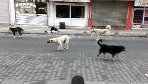 Karataşın sorunu başıboş köpekler