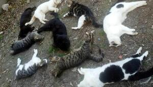 Alanyada 30 kedi katledildi