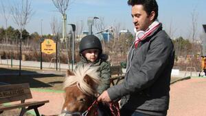 Robodaedaluslar Pony Parkta