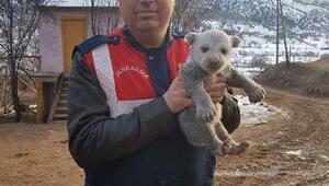 Yavru boz ayı, donmaktan son anda kurtarıldı