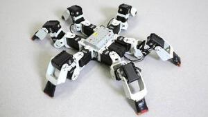Robot böcekler gerçeğini aratmıyor