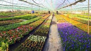 Muğlada park ve bahçeler süsleniyor