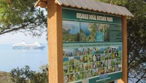 Bakanlıktan Akdeniz foklarının korunması için sevindiren haber