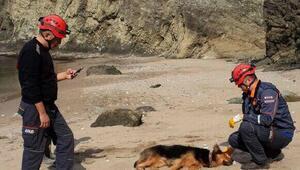 Kayalıklardan düşen köpek sahil güvenlik botuyla kurtarıldı