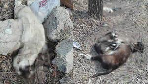 Elmadağ'da köpek katliamı