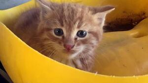 Kampüste kedi kurtarma operasyonu