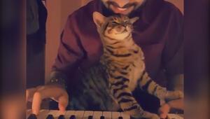 Müzik sevdalısı sevimli kedi