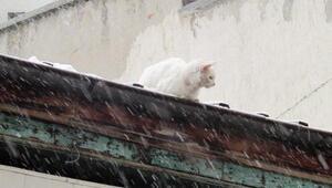 İtfaiyeden kedi kurtarma operasyonu