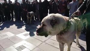 Hollandaya köpekli protesto