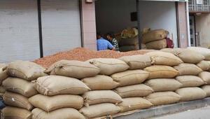 72 bin fındık üreticisi ürününü sigortaladı