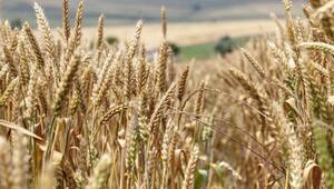 TUSAF Başkanı Ulusoy: Tarım sektöründe bir devrim