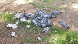 Suruç'ta güvercinler telef oldu