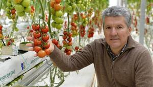 Bu domatesler çok farklı