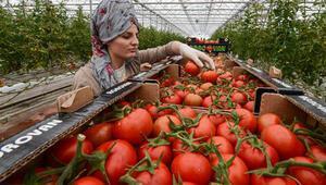 Rusyadan domates açıklaması