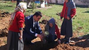 Mengen Anadolu İmam Hatip Lisesi bahçesi ağaçlandırıldı