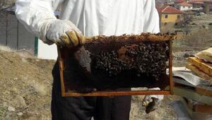 Arı ölümleri Şereflikoçhisarda da görülüyor