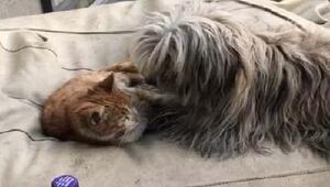 Kedi ile köpek birlikte oynuyor