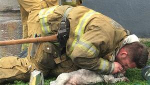 İtfaiye görevlisi, suni teneffüsle köpeği hayata döndürdü