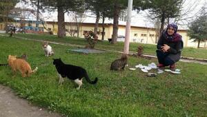 Üniversiteli Songül hergün 20 kediyi besliyor