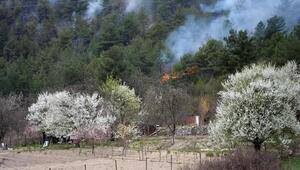 Karabükte 3 dönümlük kızılçam ormanı yandı