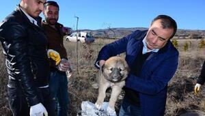 Düştüğü rögardan kurtarılan yavru köpek, bakıma alındı