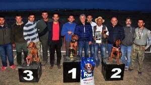 Av köpeği güzellik yarışması