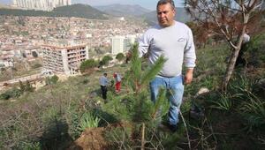 Bayraklı ağaçlandırılıyor