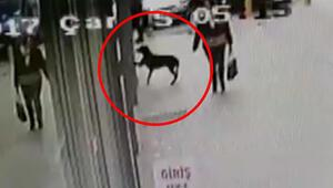 Video shows hungry stray dog knocking on supermarket's window in Turkey's Kocaeli