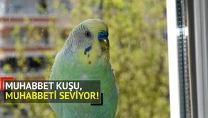 Muhabbet Kuşu Haberleri Son Dakika Güncel Muhabbet Kuşu Gelişmeleri