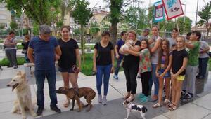 Milas Önder Gazetesi Sokak Köpeklerini Hedef Gösterdi