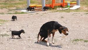 Uşak Haberleri: Yavru köpekler zatürre ve açlıktan telef olmuş 78