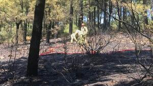 Aydos Ormanında şüpheli yangın