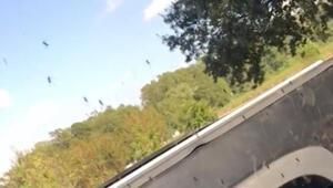 Karnabahar Koftesi Videosu
