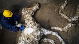 Pompeiide taşlaşmış at kalıntıları bulundu 31
