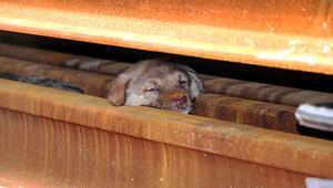 Uşak Haberleri: Yavru köpekler zatürre ve açlıktan telef olmuş 30