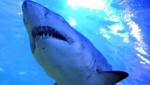 Köpekbalıkları ve insanlar aynı obezite genine sahip 81