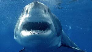 Köpekbalıkları ve insanlar aynı obezite genine sahip 39
