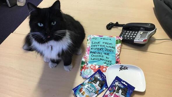 Kıdemli Tren Garı çalışanı Kedi Felix Ile Tanışın Kampüs Haberleri
