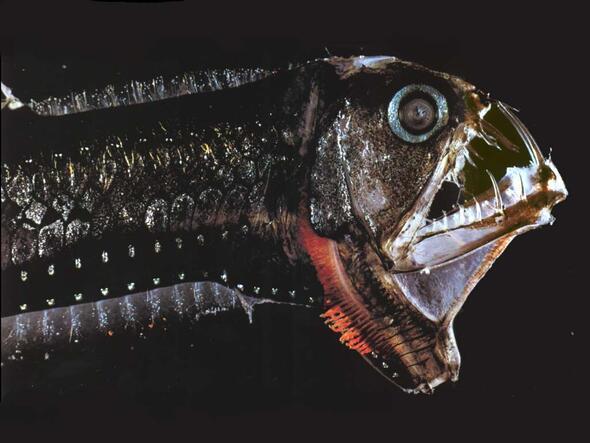 Deniz canlısı Videoları Sayfa 2