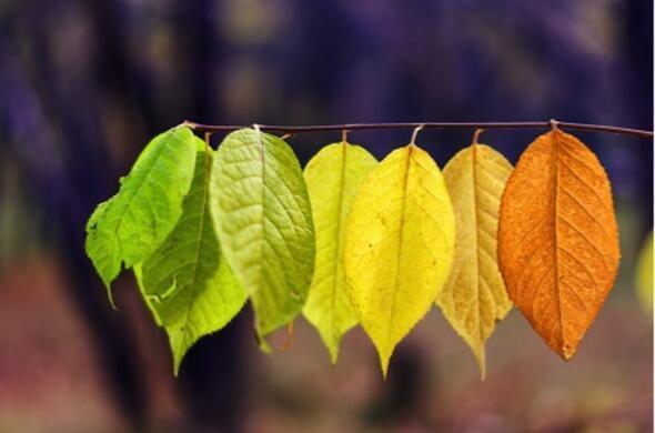 Sonbahar depresyonundan korunmanın 7 yolu
