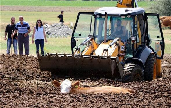 Erzincan'da inek kurtarma operasyonu ile ilgili görsel sonucu