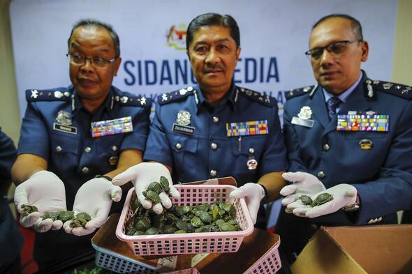Malezyada 5 binden fazla kaplumbağa havalimanında ele geçirildi