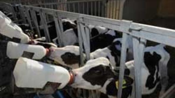 Süt ihracatı patlayacak