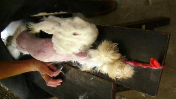 PETAnın yayınladığı görüntülerin ardından Çine tepki