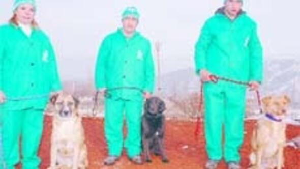 Ankara Haberleri Sahipsiz Köpekler Için çağdaş Sahiplendirme