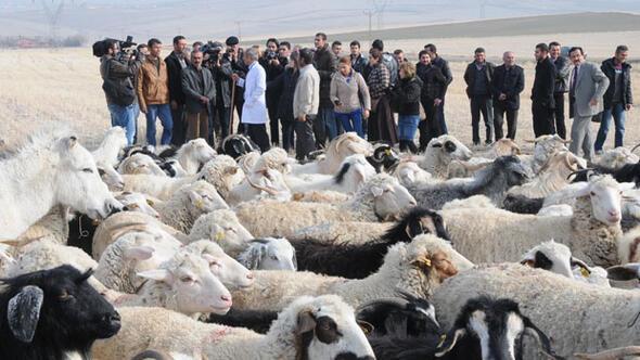 İŞKUR'dan 'sertifikalı' çoban eğitimi ile ilgili görsel sonucu