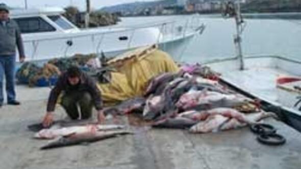 Hamsi için gittiler, 100 köpekbalığı ile döndüler