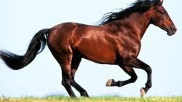 Karargahı Ankara, sembolü at