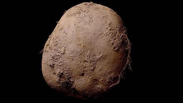 Bu patatesin değeri 1 milyon Euro